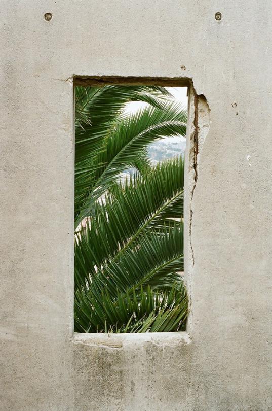 Claudio Troncoso Rojas © #photography #concrete #palm