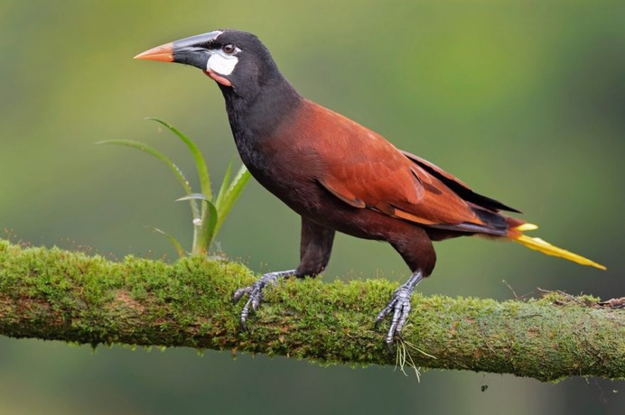 #your_best_birds: Beautiful Birds of India by Thirumoorti Ra