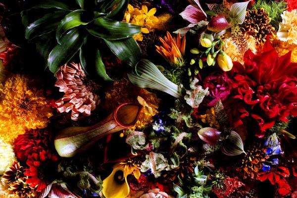 Makoto Azuma 6 #azuma #makoto #design #nature #flower #colourfull