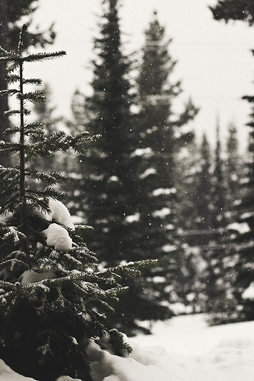 Rumble Tumble Little Life #beauty #tree #cold #snow #wood #photography #frost #pine #forest #snowflakes #winter