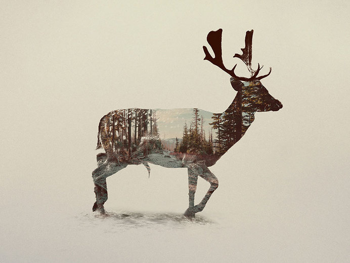 Double-Exposure Animal Portraits By Norwegian Photographer #photography #nature #animal