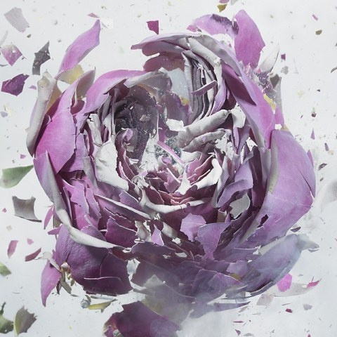 High Speed Flower Explosions by Martin Klimas | PICDIT #photos #explosion #photo #art #flower