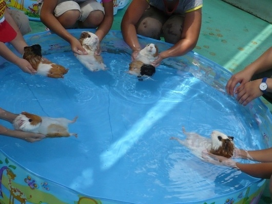 Boing Boing #swimming #fun #relax