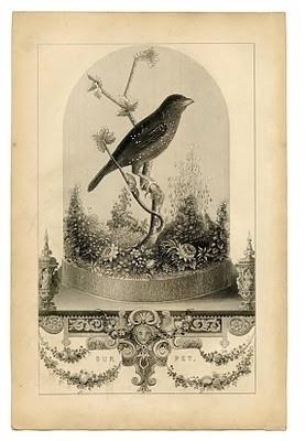 Birds of a Feather / Pretty bird ephemera #vintage