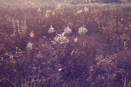Paul Octavious - Montrose Harbor #photography #octavious #paul