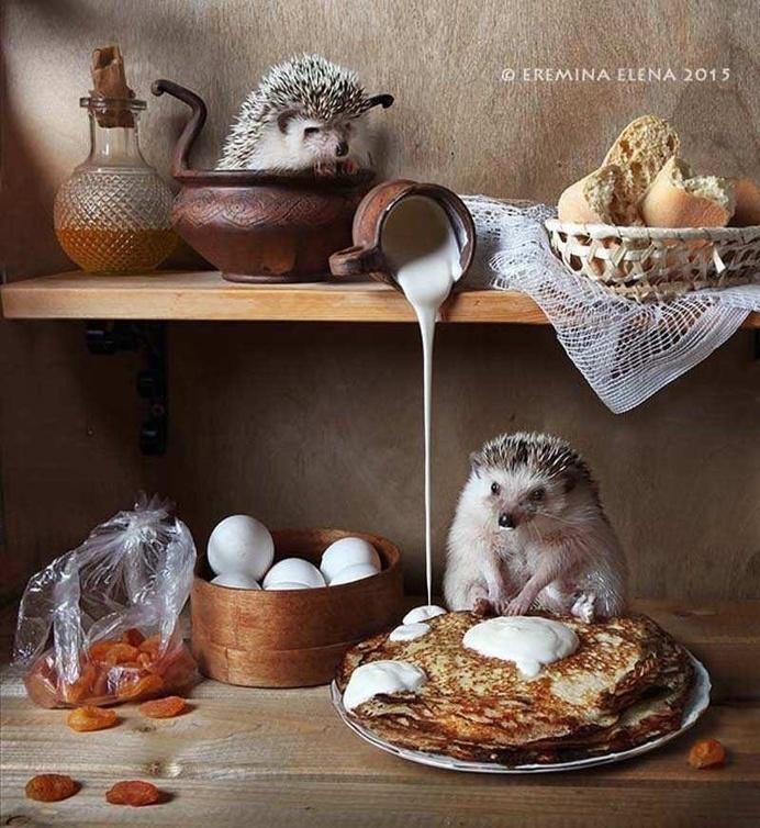 Elena Eremina Captures The Secret Life Of Hamsters