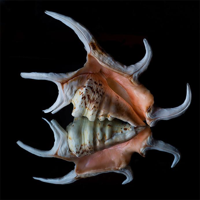The Striking Beauty of Seashells Photo by Bill Gracey