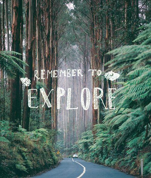Dailymovement #adventure #forest #explore #trees