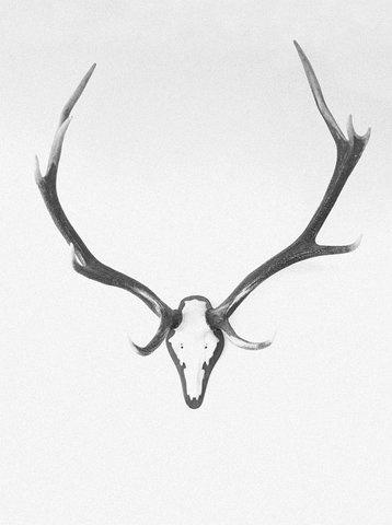 wanderlust #antlers