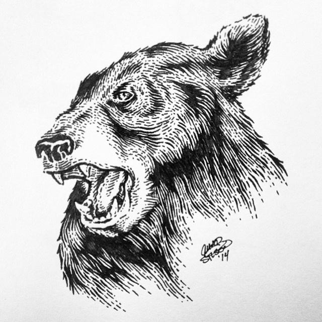 Black_bear_done #illustration