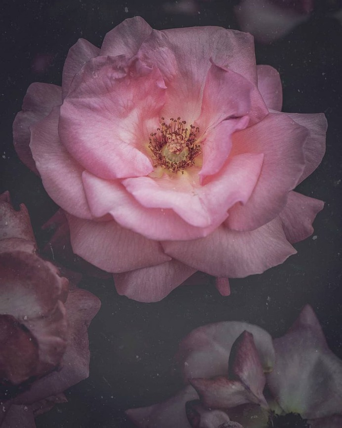 Conceptual and Fine Art Flower Photography by Ana Tudur