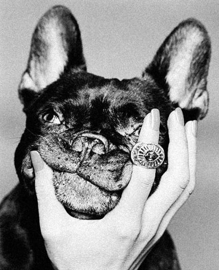 THEM THANGS - Part 29 #them #frenchie #french #bulldog #things
