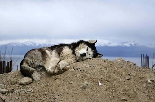 The Black Workshop #mountain #ground #sleep #mood #cute #dog