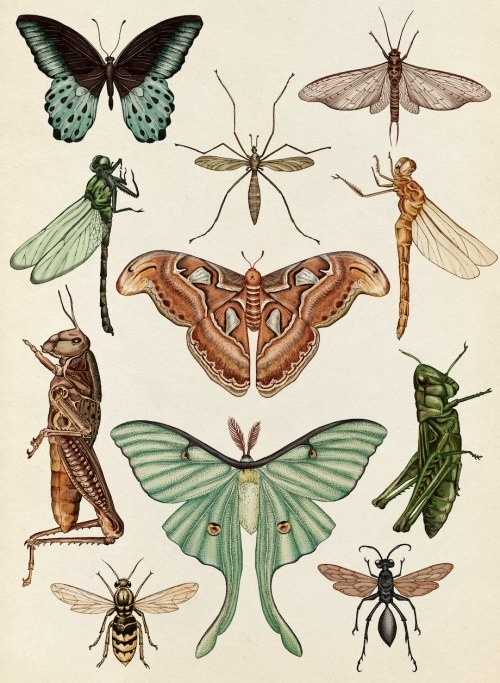 Best Moth Animals Nature Tumblr Drawing Images On Designspiration
