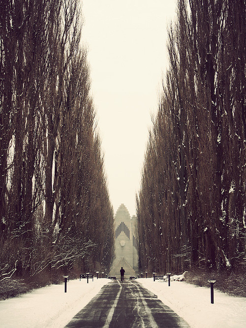 Kim Holtermand #path #trees #photography #snow