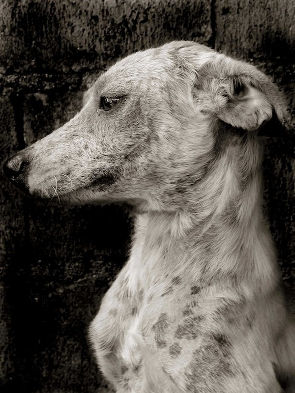 Street Dogs #inspiration #photography #animals