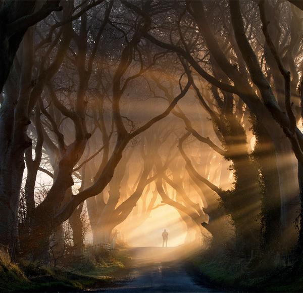 Misty Nature Photography #photo