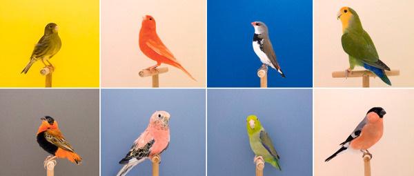 Lukestephenson #birds #photography #colour #minimal