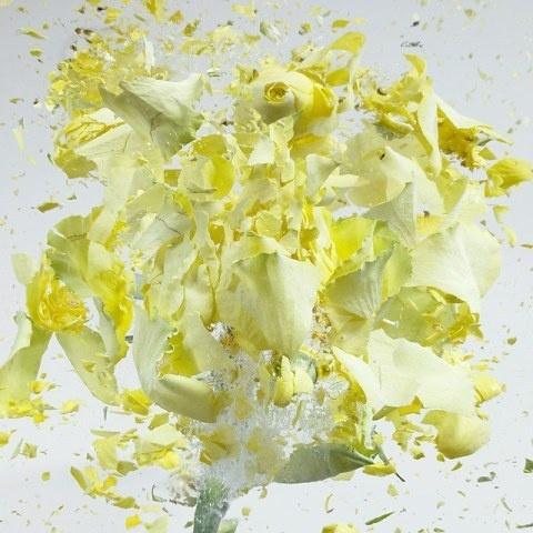High Speed Flower Explosions by Martin Klimas   PICDIT #photos #explosion #photo #art #flower