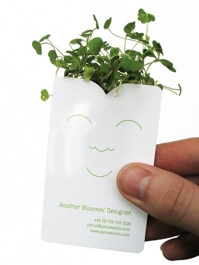 Another Bloomin' Designer - Jamie Wieck - Design, Illustration & Creative Thinking #plant