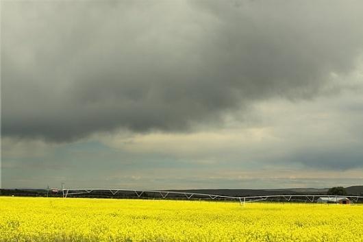 Modern Neon Landscape Photograph Canola by lucysnowephotography #yellow #photography #storm #gray #canola