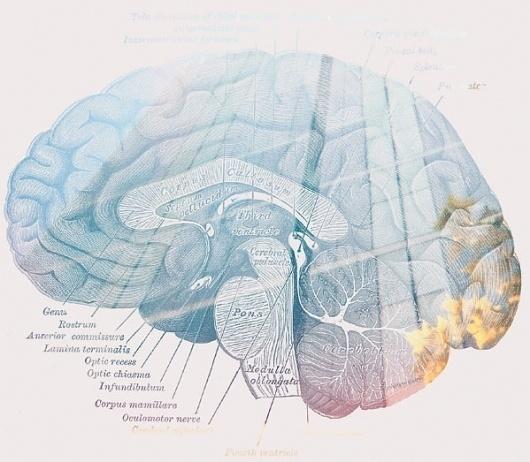 brain.jpg (JPEG Image, 599x523 pixels) #blue #graphic #brain