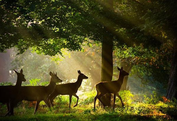 Nature Photography by Alex Saberi #inspiration #photography #nature