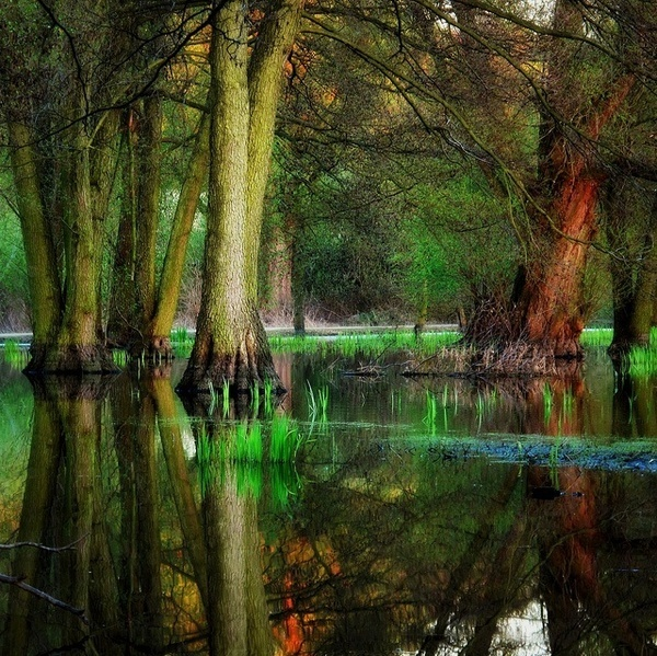 Beautiful Forest Photography by Bernd Rettig #inspiration #photography #nature