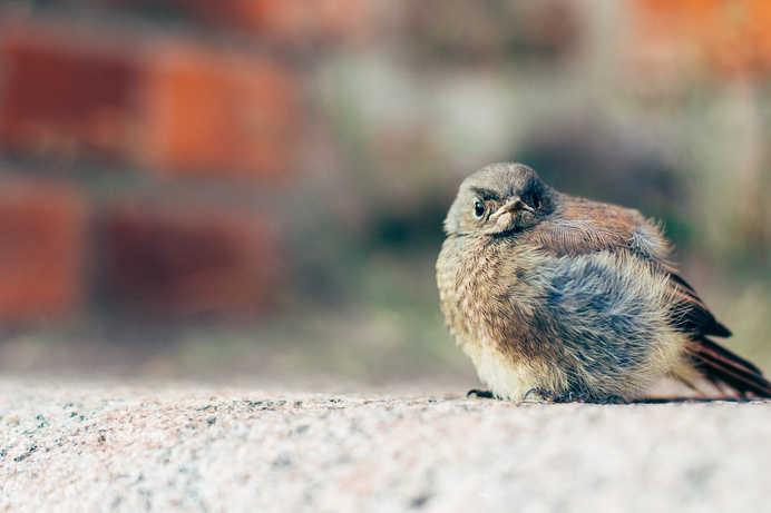Angry Birds ;) #angry #cityscape #bird #birds #photography #vintage #street #cute #funny
