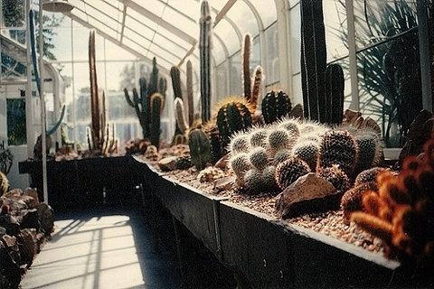 FFFFOUND! #greenhouse