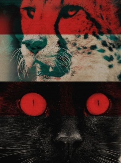 ▼anglophonic▼ #red #cat #animals #tiger #colour