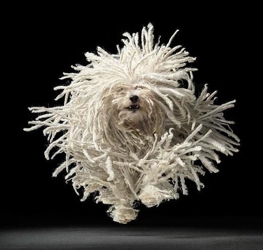 Tim Flach | Dogs | bumbumbum #flach #amazing #gods #tim #dogs #photography #dog