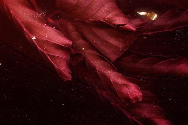 KARBORN #texture #leaves