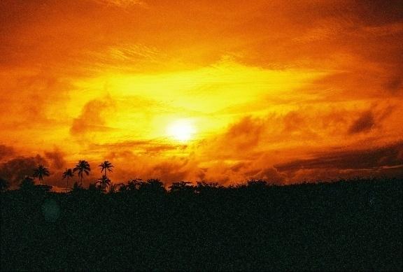 A Photo by stitch - Lomography. Nostalgic redscales. #palm #tree #lomography #redscale #nostalgia #sunset