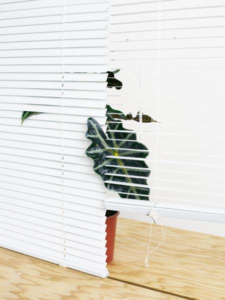 HelloMe_CriticalObjects_ObjectVI_02 #window #indoor