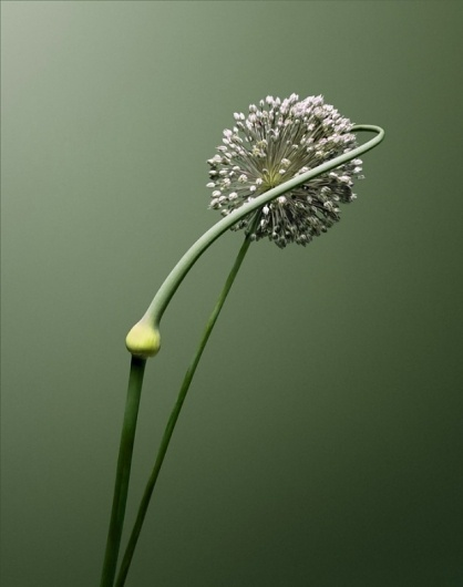 The country habit has me by the heart… - but does it float #photography #minimal #plant