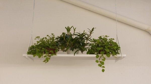 NU Showroom #plants