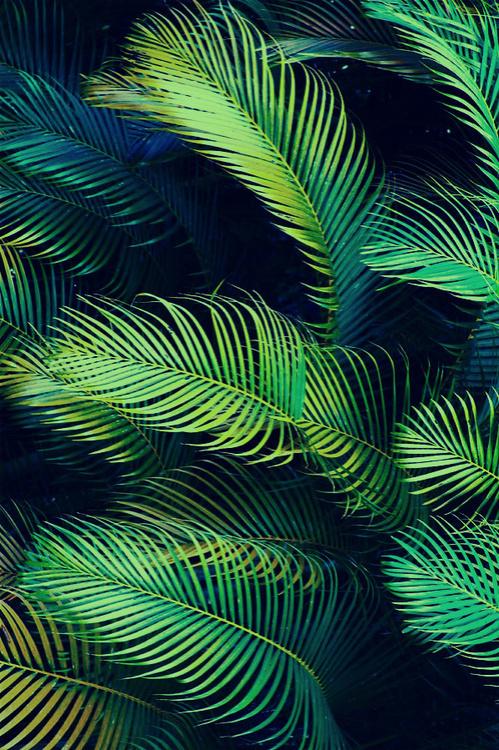 palms #photo #texture