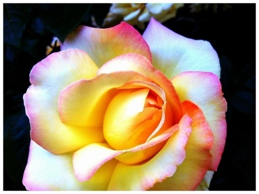 Facebook #flower #ombre #gradient