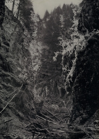 All sizes | - | Flickr - Photo Sharing! #abstract #blackwhite #genadii #wood #berzkin #forest #trees #grey
