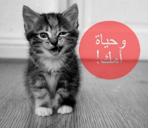 foreverCOLORBLIND #white #arabic #cat #black
