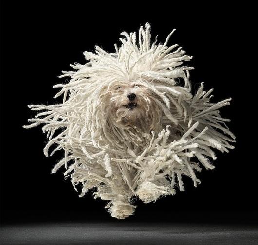 Fotografía de Perros por Tim Flach — Monkeyzen #flach #movement #tim #photography #dog