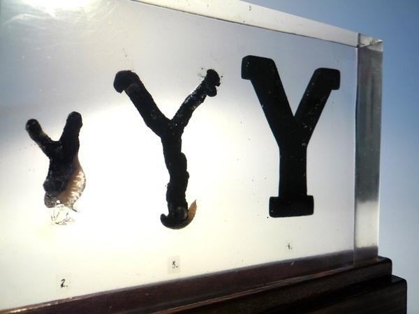 Evolution of Type, Exhibit 17 & 19 #typography