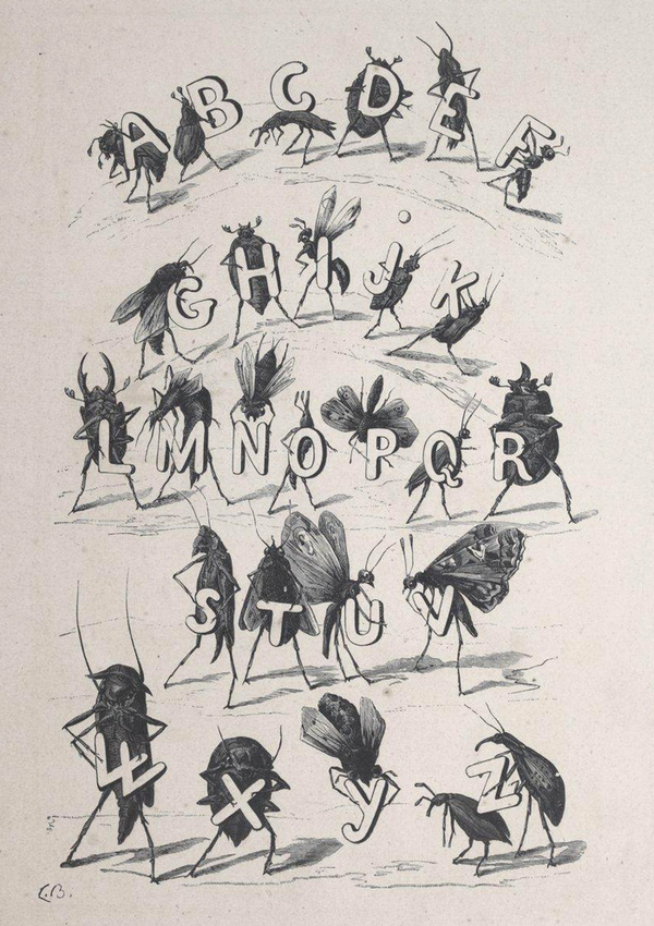 Illustrations by Fortuné Méaulle for Alphabet des Insectes by Leon Becker (France, 1883) #insects #illustration #alphabet #typography