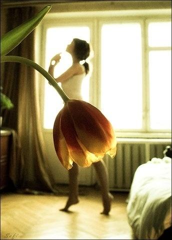 0ZEBnoQrc67dkc24ZvySUokC_400.jpg (344×480) #flower #ballet
