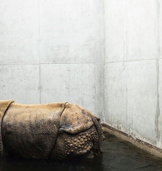 Melancholia i smutek zwierząt z ogrodów zoologicznych na poruszających zdjęciach | Fotoblogia.pl
