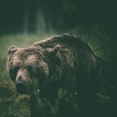 GO 70xc2xb0 NORTH: Alexander Kopatz #bear #photography #nature