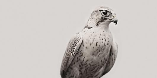 TROY MOTH #photo #birds