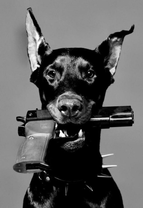 Dog #stamp #chris #taylor #steven #awesome
