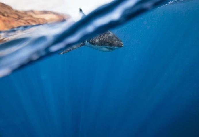corey-arnold-wildlife-photography-6 #photography #shark #animals